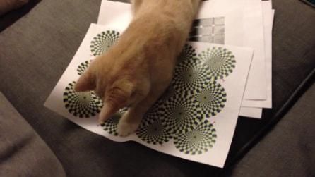 Un gatto ingannato dalle illusioni ottiche delle spirali