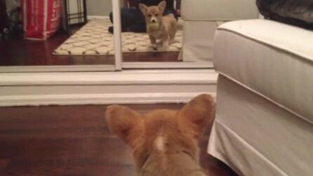 Fiona, la cagnolina si vede per la prima volta nello specchio