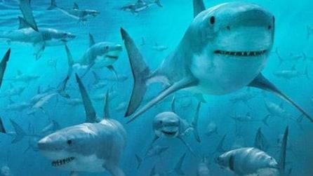 Usa, un branco di migliaia di squali invadono la costa