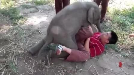 Il piccolo Elefante che ama le coccole
