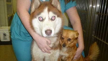 Isaac, il cane cieco e la sua inseparabile guida a 4 zampe