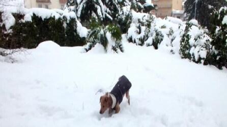 Baloo e la neve
