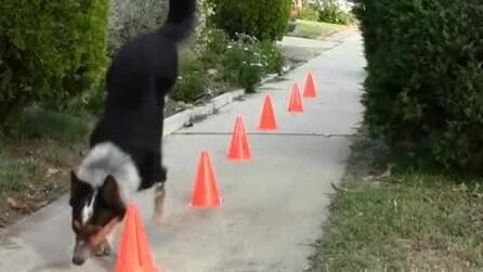 Il cane acrobata che fa parkour e va sullo skate