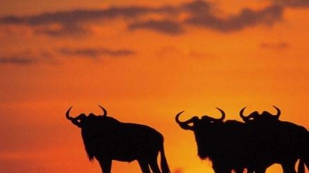 Il Safari in Kenya: esperienza unica ed inimitabile
