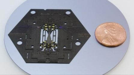 Gli insetti robot, la nuova frontiera della tecnologia