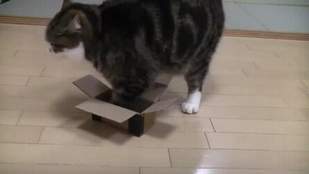 Il gatto che sta sulle scatole