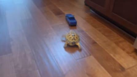 Macchinina contro tartaruga: chi vincerà?