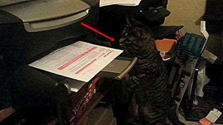 Gattino vs stampante, l'agguato improvviso al foglio