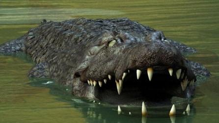 Mai stuzzicare un coccodrillo, le brutte sorprese sono dietro l'angolo