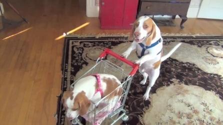 Un cane spinge il suo cucciolo nel carrello della spesa