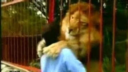 Baci e abbracci, l'amore tra un leone e la donna che lo ha salvato
