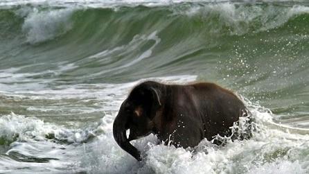 Quando un cucciolo di Elefante vede per la prima volta il mare