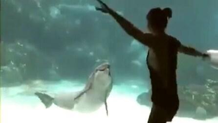 Un delfino ride vedendo una ragazza danzare