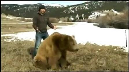 Brutus, l'orso che che ama le coccole