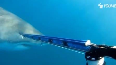 A tu per tu con lo squalo: paura, adrenalina e tanta fortuna