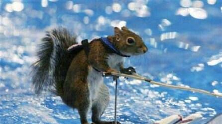 Twiggy, lo scoiattolo campione di sci d'acqua