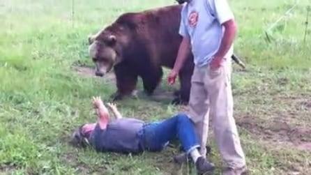 """Vi piacerebbe giocare con un """"orsacchiotto"""" di 300 kg?"""