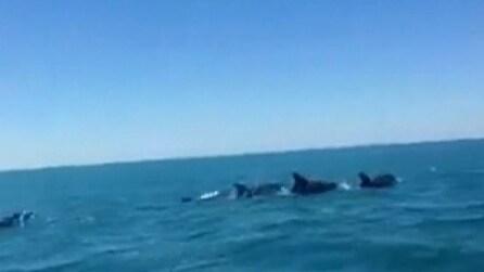Branco di delfini avvistati a Roma