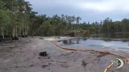 Louisiana, la terra inghiotte gli alberi in pochi secondi