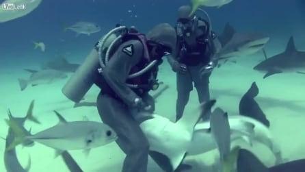 Shark hook removal LO SQUALO HA UN AMO IN GOLA LEI INFILA