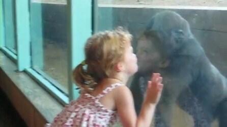 Kyla la bimba che conquista un gorilla, bacio attraverso il vetro