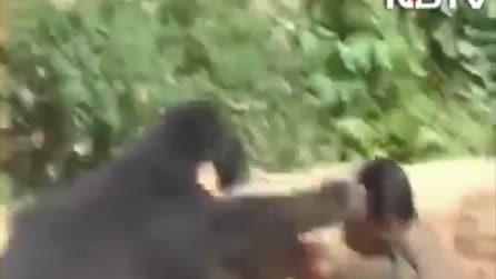 Orso salvato da un pozzo, attacca una guardia forestale