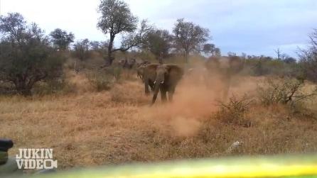 Elefante sferra un attacco brutale ad una Jeep durante un Safari