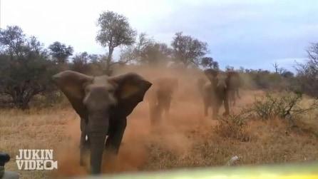 Un branco di elefanti attacca una Jeep durante il Safari