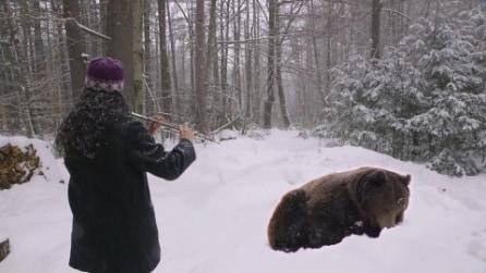 Suona con il flauto e fa addormentare un orso bruno