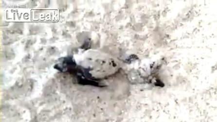La nascita delle tartarughe marine, una meraviglia della natura