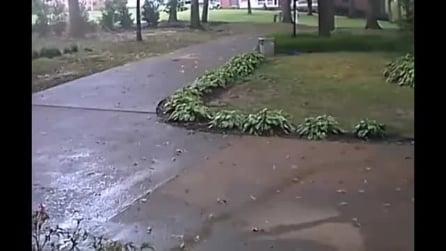 Sapete perché durante un temporale non ci si ripara sotto un albero? Ecco spiegato il motivo