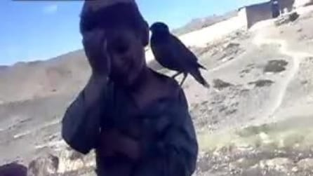 Un uccellino che piange come un neonato