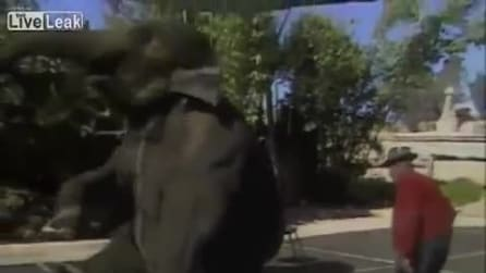Un elefante non dimentica mai: ecco il commovente incontro con il suo ammaestratore dopo 15 anni