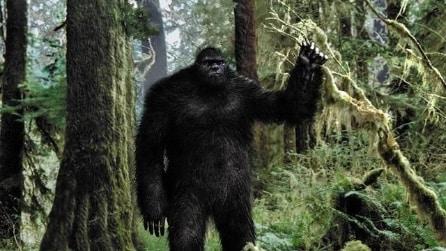 Il Bigfoot esiste? Gli esperti americani dicono di si