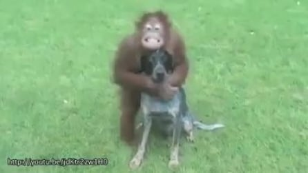 Un'amicizia senza fine: quando la differenza di specie non esiste