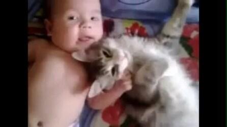Gatto coccola un bambino ♥