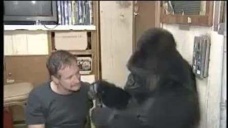 Robin Williams comunica attraverso i gesti con un Gorilla