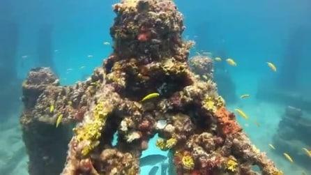 Neptune Memorial Reef, il cimitero sottomarino