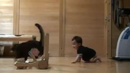 Gatto insegna ad un bambino come camminare ♥, adorabili