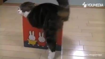 I gatti e le scatole, un abbinamento super divertente
