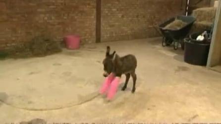 L'asinello dalle zampe rosa ingessate