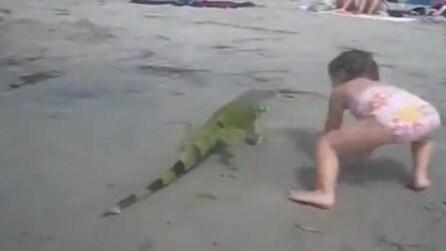 L'iguana che riemerge dal mare ed incuriosisce i bambini