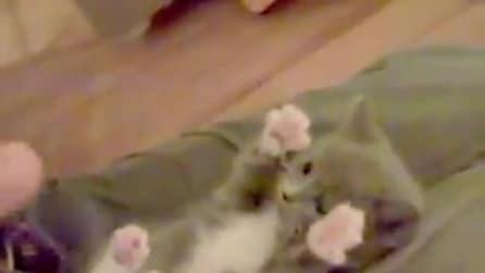 """Gattino """"fifone"""", gioca con le mani della padrona"""
