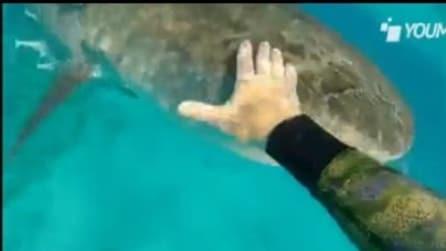 Meglio non avvicinarsi troppo ad uno squalo!