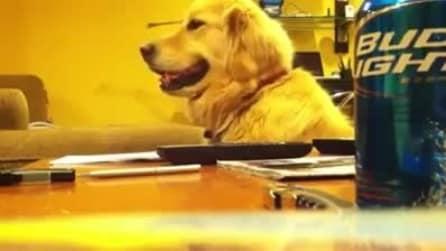 Ecco come reagisce il cane, appena il suo padrone smette di suonare