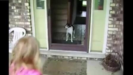 Un cane nel panico confonde la porta per una finestra