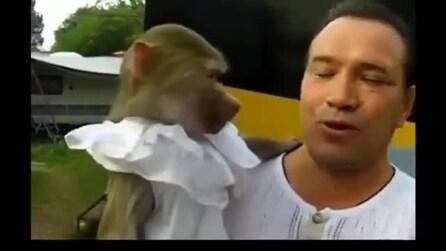 Incredibile, la scimmia che imita tutto quello che fai