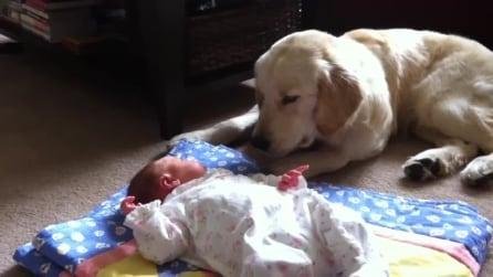 Con un baby-sitter così è difficile non divertirsi!