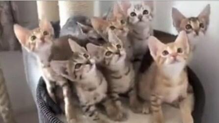 Il più bel video di gatti di sempre!