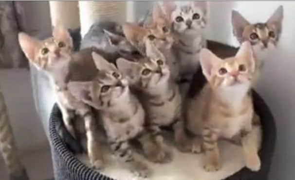 Il Più Bel Video Di Gatti Di Sempre